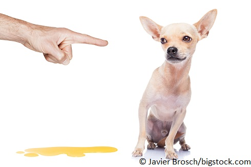 Wie bekomme ich meinen Hund stubenrein?