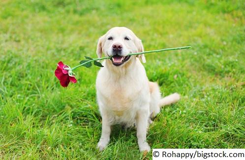 Ab wann sollten Sie mit Ihrem Welpen in eine Hundeschule?